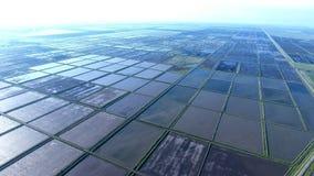Überschwemmte Reispaddys Landwirtschaftliche Methoden des Anbauens des Reises Lizenzfreies Stockfoto