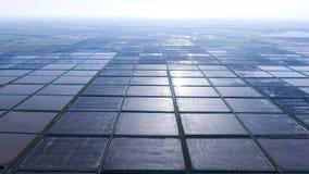 Überschwemmte Reispaddys Landwirtschaftliche Methoden des Anbauens des Reises Lizenzfreies Stockbild