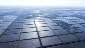 Überschwemmte Reispaddys Landwirtschaftliche Methoden des Anbauens des Reises Lizenzfreie Stockfotos