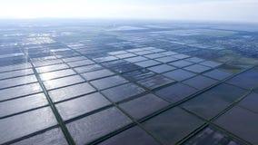 Überschwemmte Reispaddys Landwirtschaftliche Methoden des Anbauens des Reises Lizenzfreie Stockfotografie