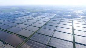 Überschwemmte Reispaddys Landwirtschaftliche Methoden des Anbauens des Reises Stockfoto