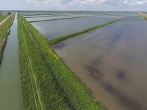 Überschwemmte Reispaddys Landwirtschaftliche Methoden des Anbauens des Reises im f Stockfotos