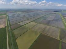 Überschwemmte Reispaddys Landwirtschaftliche Methoden des Anbauens des Reises im f Lizenzfreie Stockfotos