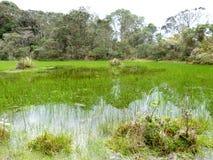 Überschwemmte Weide nahe dem Piedmont lizenzfreie stockfotografie
