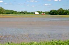 Überschwemmter Bauernhof Stockbilder