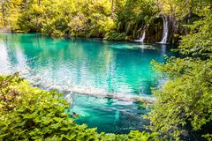 Überschwemmter Baum im Türkiswasser des Waldsees, ein Wasserfall im Hintergrund Plitvice, Nationalpark, Kroatien lizenzfreies stockfoto