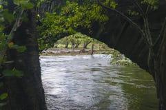 Überschwemmter Cockerspaniel stockbild