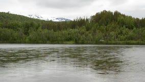 Überschwemmter Fluss, der langsam mit üppigem Waldlandschaftshintergrund läuft stock footage