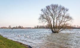 Überschwemmter Polder mit alleinem Baum Lizenzfreie Stockfotografie