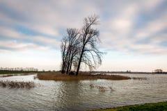 Überschwemmter Polderbereich in den Niederlanden Stockfotografie