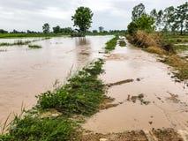Überschwemmter Schaden des Landwirtschafts-Reisfeldes Stockfotos