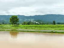Überschwemmter Schaden des Landwirtschafts-Reisfeldes Lizenzfreie Stockfotos