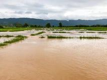 Überschwemmter Schaden des Landwirtschafts-Reisfeldes Stockbilder
