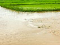Überschwemmter Schaden des Landwirtschafts-Reisfeldes Lizenzfreie Stockbilder