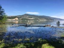 Überschwemmter See und Feld mit Enten Lizenzfreie Stockfotografie