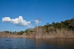 Überschwemmter Wald Stockfoto