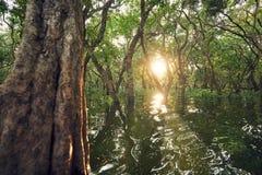 Überschwemmter Wald bei dem erstaunlichen Sonnenuntergang Lizenzfreie Stockfotos