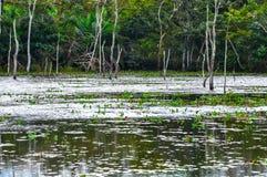 Überschwemmter Wald, Pantanal, Mato Grosso (Brasilien) Lizenzfreies Stockbild
