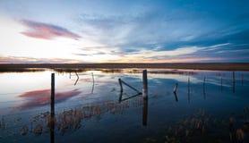 Überschwemmtes farmlandn am Sonnenuntergang Stockfotografie