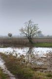 Überschwemmtes Feld Lizenzfreie Stockbilder