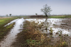 Überschwemmtes Feld Stockbild