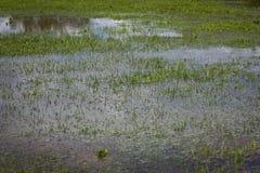 Überschwemmtes Gras Stockbilder