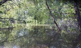 Überschwemmtes Holz in Texas Lizenzfreies Stockbild