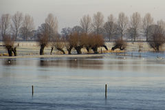 Überschwemmtes Land Lizenzfreies Stockfoto