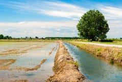 Überschwemmtes Reisfeld Stockfoto