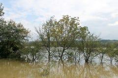 Überschwemmung, Bäume gefangen in der Wasserstraße stockfotos