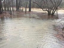Überschwemmung im Wald Stockfoto