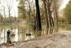Überschwemmung vom Fluss PO Stockbilder