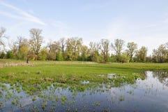 Überschwemmungsgebiet mit Bäumen Stockbild