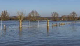 Überschwemmungsgebiete IJssel in den Niederlanden lizenzfreie stockfotografie