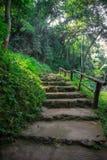 Übersichtskorridor im tropischen Regenwald Stockfoto