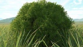Übertragen Sie von einer Zypresse, die auf einer Wiese steht Stockbild