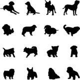 Überwachen Sie den berühmten Hund Lizenzfreie Stockfotos