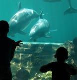 Überwachende Delphine Lizenzfreie Stockbilder