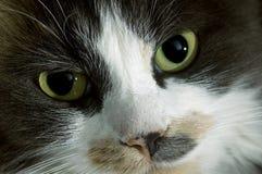 Überwachende Katze Lizenzfreie Stockfotografie
