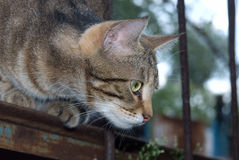 Überwachende Katze Stockbild