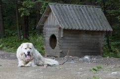 Überwachender Hund Lizenzfreies Stockbild