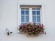 Überwachungskameras auf dem Fenster des Gebäudes nahe dem Fenster mit Blumen lizenzfreie stockfotos