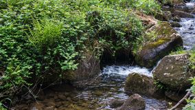 Überwucherte Flusssteine am Flussbett stockfotos