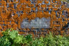 Überwucherte orange Flechte des alten Hauses, Sao Miguel Island, Azoren lizenzfreie stockfotos