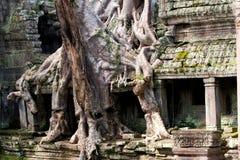 Überwucherte Ruinen Kambodscha Stockfoto