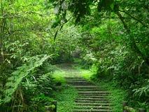 Überwucherte Treppe in einem grünen Wald im Xitou-Natur-Ableitungs-Bereich, Taiwan stockfotografie