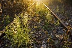 Überwucherte verlassene Eisenbahnlinien bei Sonnenuntergang stockbilder