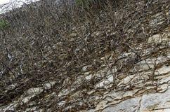Überwucherte Wandkletterpflanze lizenzfreie stockbilder