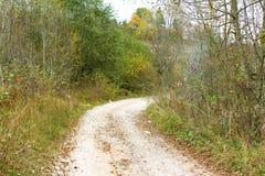 Überwucherter Schotterweg umgeben durch Bäume, farbige Herbstfarbe stockfotos