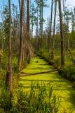 Überwucherter Strom in einem Wald mitten in einem Sumpf stockbild